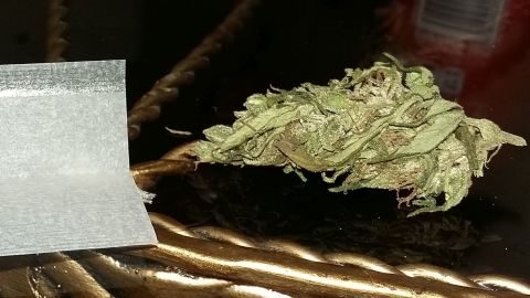 'Malawi Gold' is among the most popular strains of cannabis in the US.