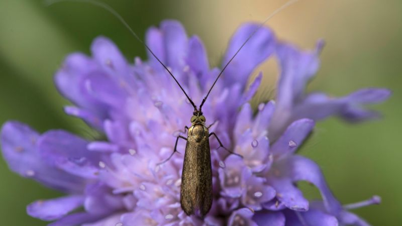 New study suggests insect populations have declined by 75% over 3 decades | CNN