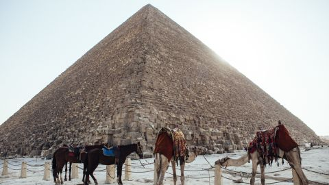 CAIRO, EGYPT - OCTOBER 21: Camels and horses stand tied to a fence below the Great Pyramid of Giza on October 21, 2013 in Cairo, Egypt. The Pyramids of Giza, one of the seven wonders of the ancient world and built around 2600 B.C., are one of Egypt's major tourist drawcards. After a summer of violence, tourist numbers across Egypt are at their lowest levels since a 2010 peak in tourism in the country. While Egypt's tourism sector took a dive following the popular uprising that overthrew President Hosni Mubarak in early 2011, occupancy rates of hotels in the capital Cairo and across Egypt have been reported as dramatically down since the Egyptian military's overthrow of President Morsi in July. In 2010, tourism represented 13% of Egypt's economy and employed one in seven of the country's workers. (Photo by Ed Giles/Getty Images).