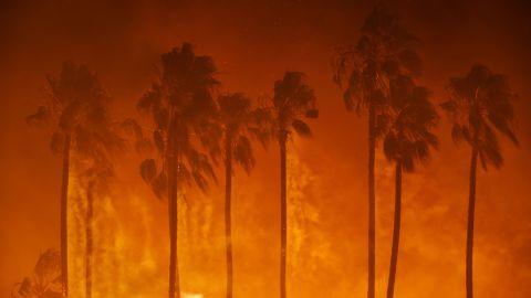 Palm trees burn in Ventura on December 5.