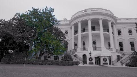 Andrew Jackson Magnolia Tree on the White House South Lawn