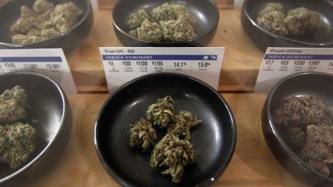 Different types of marijuana sit on display at Harborside  dispensary.