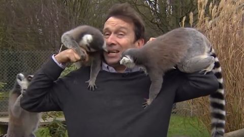 Reporter mobbed by lemurs orig newsource_00000000.jpg