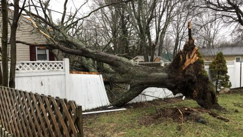 This downed tree in Brockton, Massachusetts, was tweeted by Brockton Mayor Bill Carpenter on March 2.