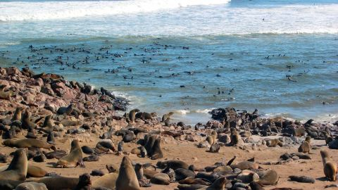 """""""The waters off the coast of Namibia are an important area for a high diversity of resident and migratory species, such as sharks, whales, dolphins and seals,"""" Thompson tells CNN."""