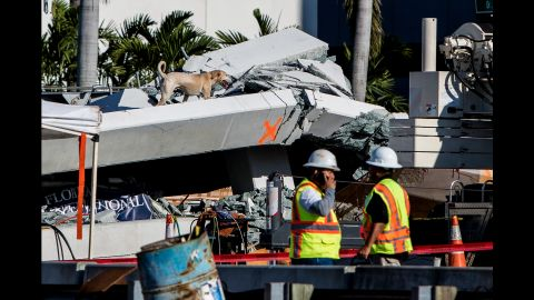 A rescue dog searches for victims after the bridge collapsed.