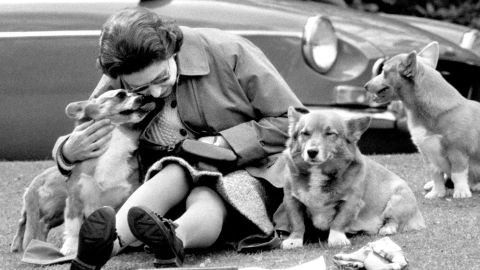 Queen Elizabeth II has reportedly owned more than 30 corgis during her reign.