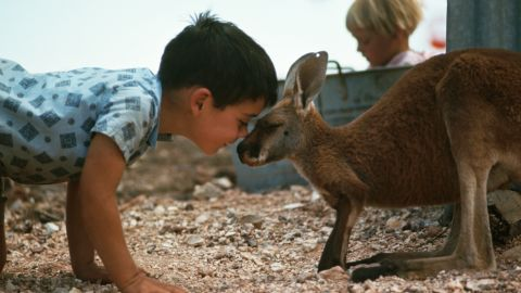 A young boy plays on the ground with his pet kangaroo in South Australia.
