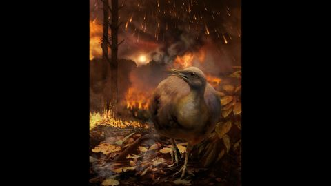The asteroid impact that caused dinosaurs to go extinct also destroyed global forests, according to a new study. This illustration shows one of the few ground-dwelling birds that survived the toxic environment and mass extinction.