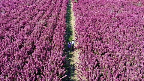 <strong>Laoting County, China: </strong>Tourists explore an ecological landscape area in Laoting County in north China's Hebei Province. <br />