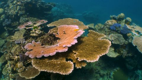 Ivan Watson is on the Great Barrier Reef for world oceans day to explore the efforts underway to save the great barrier reef.  THE RACE TO SAVE THE REEF