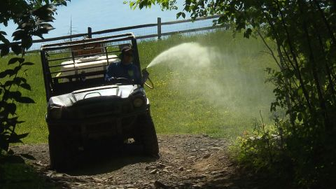 Ivy Oaks Analytics sprays insecticide at Indian Head Camp in Equinunk, Pennsylvania.