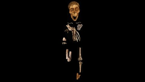 The foot is one part of a partial skeleton of a 3.32 million-year-old skeleton of an Australopithecus afarensis child dubbed Selam.