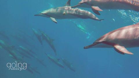 mauritius marine conservation _00005617.jpg