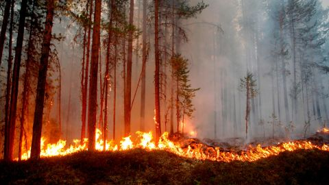 Fire burns in Karbole, Sweden, on July 15, 2018. - Due to the dry weather, 80 wildfires burned in Sweden. (Photo by Mats ANDERSSON / TT News Agency / AFP) / Sweden OUT        (Photo credit should read MATS ANDERSSON/AFP/Getty Images)