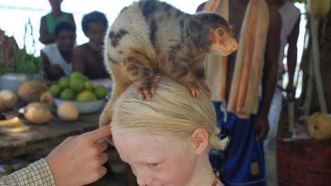 A tree-kangaroo perches on Siobhan's head in Ninigo archipelago, Papua New Guinea