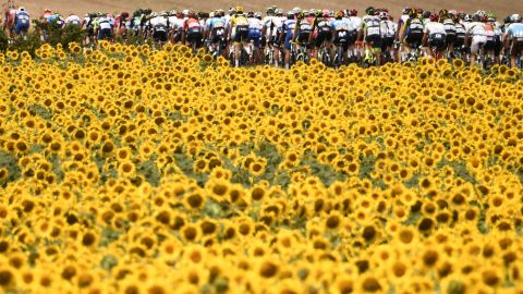 The pack rides past sunflower fields on July 24.