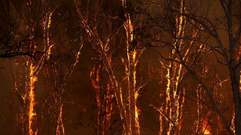 Flames from the Carr Fire burn through trees near Whiskeytown on July 27.