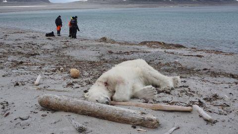 A polar bear was shot and killed after attacking a cruise ship guard, according to the German cruise company Hapag-Lloyd Cruises.