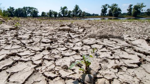 The partly dried out bed of the river Danube is pictured in Mariaposching, southern Germany, on August 1, 2018. - Inland waterway transport in the region was limited due to the ongoing heat wave and drought. (Photo by Armin Weigel / dpa / AFP) / Germany OUT        (Photo credit should read ARMIN WEIGEL/AFP/Getty Images)