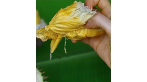<strong>Just like custard: </strong>In Malaysia, meanwhile, people prefer to let the durian ripen fully on the tree and drop naturally to the ground. At that point, the pH has dropped, the fat content has increased, and the aromatic bulbs inside will smell more strongly of sulfur as they ripen, she adds.