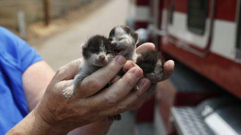 Rose Wyckoff holds up three kittens August 10 in a Redding neighborhood that has been destroyed by the Carr Fire.