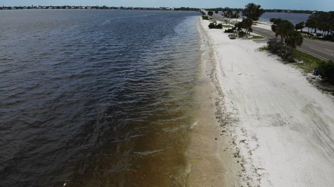 Dead fish line the shore after dying in red tide on August 1, 2018, in Sanibel, Florida.