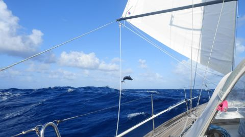 """""""We have enough memories to last us a lifetime,"""" said Helen Tibbs, who took part in the round-the-world rally in 2017 with her husband Chris. This picture of a jumping whale was taken on board their yacht in the middle of the Pacific Ocean."""