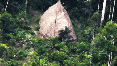 A thatched dwelling in the deep Amazon belonging to an uncontacted tribe, seen from a drone.