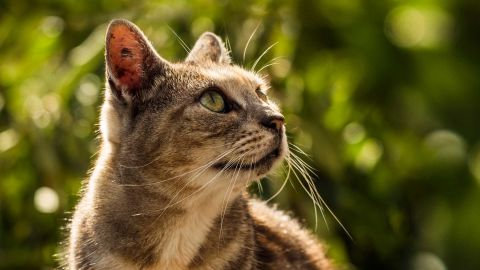 New proposals being put forward by local authorities advocate a ban on cats.