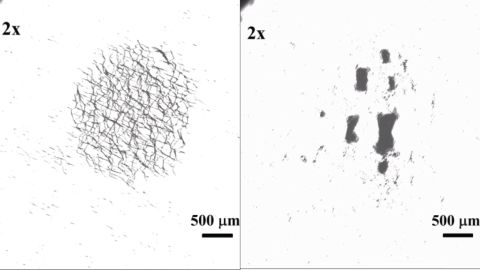 Using oscillating magnetic fields scientists can reconfigure the shape of the nano-swarm from overlapping ribbons (on the left) to clustered lumps (on the right).