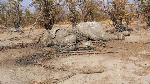Botswana was once considered a safe haven for elephants.
