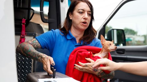 Laura Gretch, Humane Rescue Alliance transport manager, holds Frances, an 8 year-old Chihuahua mix as she help unload 26 cats and dogs arriving at Humane Rescue Alliance in Washington, Tuesday, Sept. 11, 2018, from Norfolk Animal Care and Control of Norfolk, Va., in advance of Hurricane Florence. People aren't the only ones evacuating to get out of the path of Hurricane Florence. The dogs and cats will all be available for adoption. (AP Photo/Carolyn Kaster)