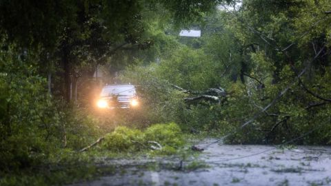 Hundreds of trees collapsed from the storm in coastal North Carolina, including these in Wilmington.