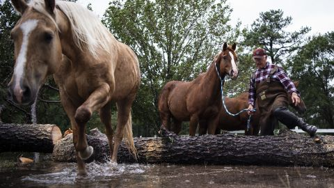 John Hendren leads horses to safety after the US Coast Guard helped cut up a fallen tree that had trapped the animals in a flooded field in Lumberton, North Carolina.