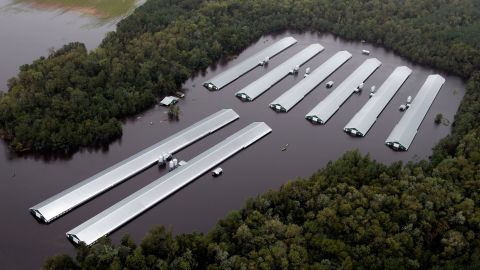Chicken farm buildings are inundated with floodwater from Hurricane Florence near Trenton, North Carolina on Sunday.
