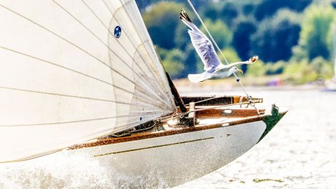 Christian Beeck captured the race between a boat and a seagull during the German Classics regatta in Kiel-Friedrichsort.