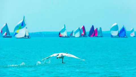 """Andras Kollmann captured a bird running across flat water towards sailing boats competing in the Kékszalag regatta on Lake Balaton, Hungary. """"Birds and sailors operate in the same way,"""" says Kollman. """"They both trim lightweight streamlined structures to create lift."""""""