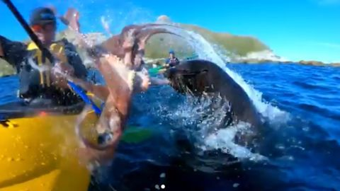 A screengrab from a video posted by Instagrammer Taiyo Masuda shows a seal slapping his friend, Kyle Mulinder, in the face with an octopus.