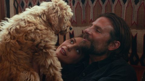"""Ally (Lady Gaga) and Jackson (Bradley Cooper) get a dog in """"A Star is Born."""" Cooper, the film's director, cast his own dog, Charlie, to play the adult version of the pup."""
