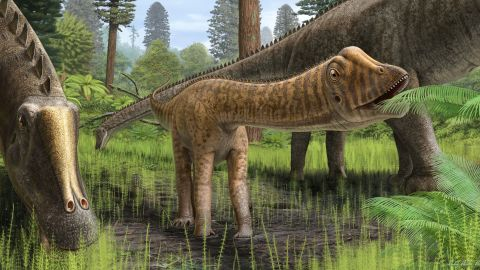 """Reconstruction of the young Diplodocus """"Andrew"""" in its environment. The teeth of """"Andrew"""" were different from those of adult Diplodocus, indicating that """"Andrew"""" fed on a wider variety of plant types. Young sauropods like """"Andrew"""" may have also lived in more forested environments for food and protection"""