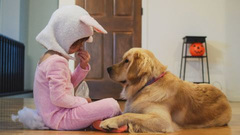 Halloween candy can be deadly for your dog or cat. Anything that's sugar-free, or contains raisins or chocolate can quickly cause seizures, even organ failure.