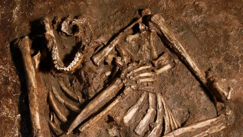 Kebara 2 is the most complete Neanderthal fossil recovered to date. It was uncovered in Israel's Kebara Cave, where other Neanderthal remains have been found.