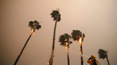 A firefighter sprays down palm trees as the Woolsey Fire burns in Malibu on November 9.