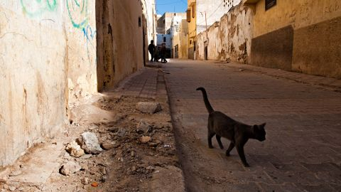 A file photograph of a cat in Morocco. Details of where the UK resident contracted rabies in Morocco has not been released by health officials.