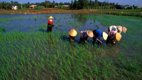 """Many local farmers are engaged in rice production, particularly in the Mekong Delta in Vietnam, pictured here, also known as """"Asia's rice bowl."""" <br /><br />"""