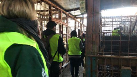 Humane Society International activists inspect the closed slaughterhouse.