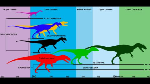 A simplified evolutionary tree of predatory dinosaurs (theropods). During the Jurassic, the three-fingered tetanuran theropods appeared, giving rise to birds.