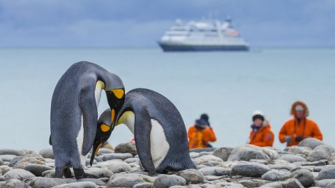 Humans could be dangerous to seabirds like these two king penguins in South Georgia, Antarctica.
