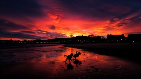 <strong>San Sebastian, Spain: </strong>Dogs run free along Ondarreta Beach as a dramatic sunset takes over the December sky.